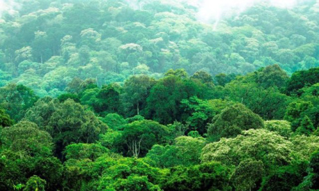 yayo-oromia-forest